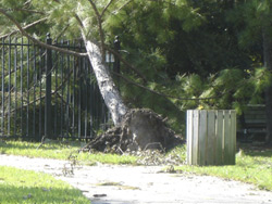 Hurricane Rita in Kingwood - The Aftermath