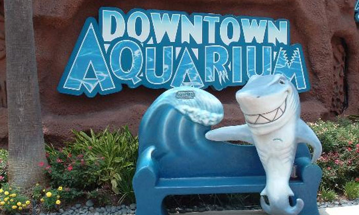 Precinct 4 Offers Downtown Aquarium Adventure