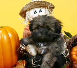 Pets to Play at First Annual Barktoberfest