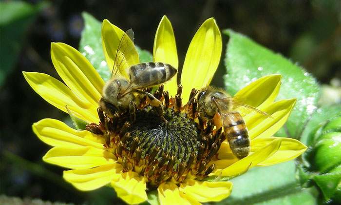 Celebrate National Pollinator Week at Jones Park